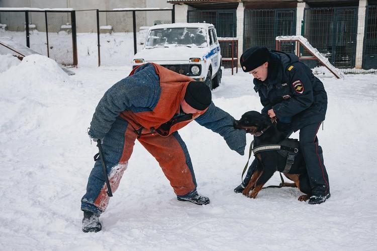 Несмотря на дружелюбный характер, Василиса сурова к преступникам. Фото: Сергей Грачев