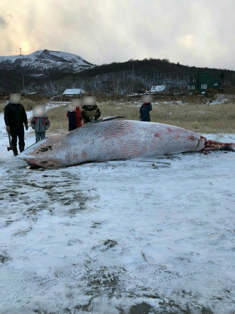 На берег Сахалина выбросило морское чудовище. ФОТО: Предоставлено местными жителями