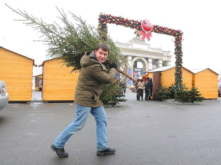 В Москве елочные базары традиционно открываются не позднее 20 декабря.