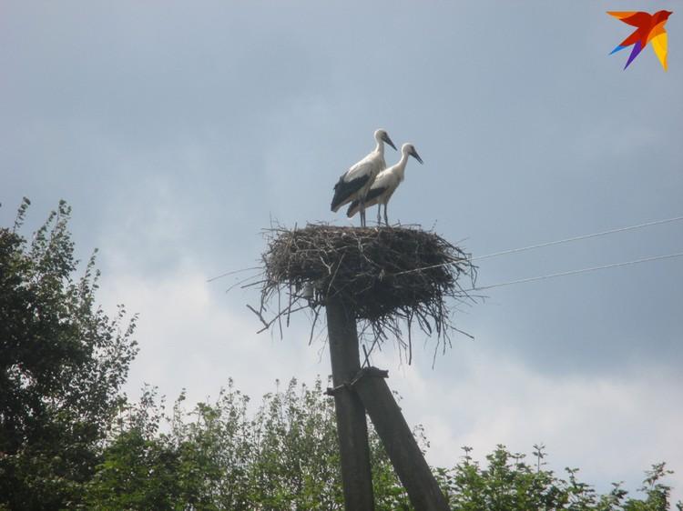 "Гнездо аистов возле дома, ""буслянка"", считалась хорошим знаком для семьи. Фото: Татьяна КУХАРОНАК"