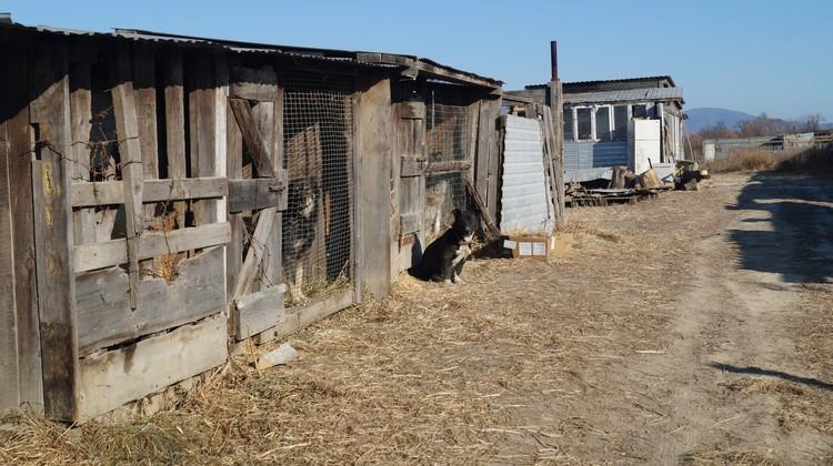 Самодельные деревянные вольеры для собак.
