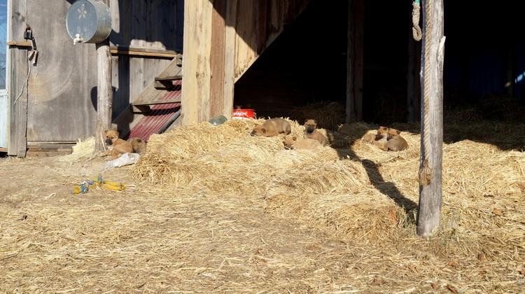 Малыши словно сливались с сеном, поэтому заметить их удалось не сразу.