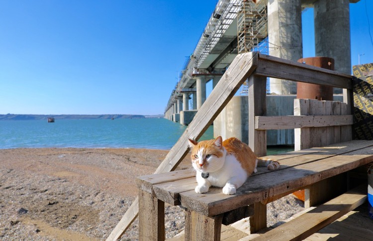 Майские праздники встречает на рабочем посту. Фото: кот Моста/VK