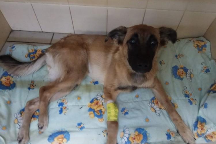 Сейчас за Юттой ухаживают ветеринары и волонтеры. Фото: vk.com/kolpino_cats_and_dogs