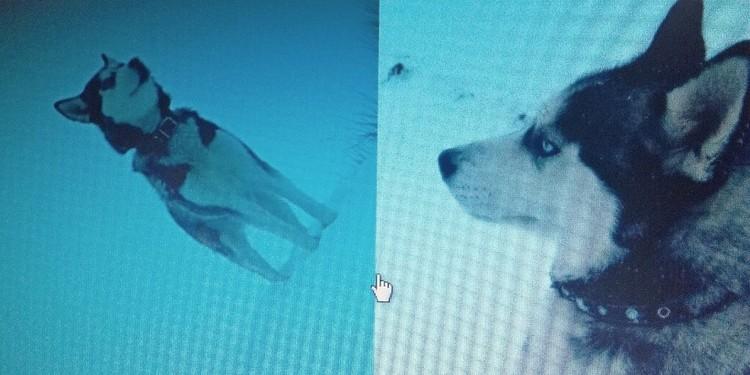 Фото: Размещено ВКонтакте владельцами собаки.