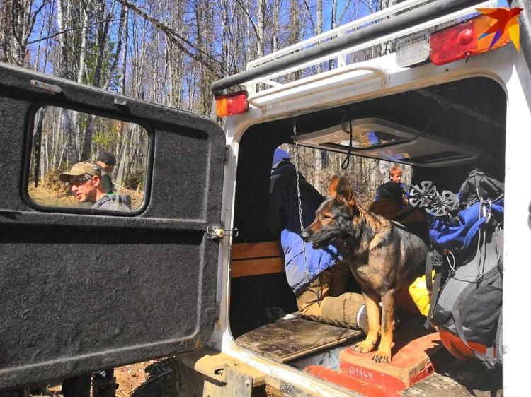 Команда 15 человек, 4 волонтёра, спасатели и я. Немецкая овчарка Зара специально натаскана искать трупы, которые долго пролежали.