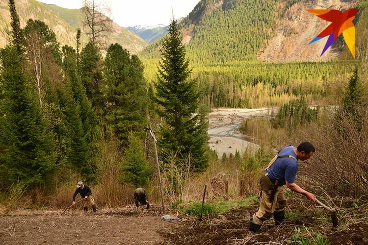 Огород Агафьи Лыковой помогают вскапывать инспекторы заповедника
