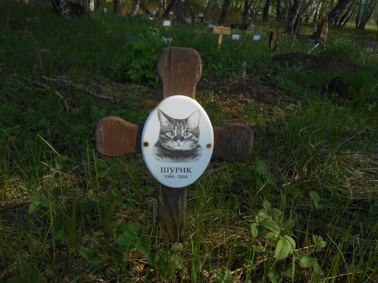 Нелегальное кладбище домашних животных нашли в районе дороги от Шершней до поселка Северный.