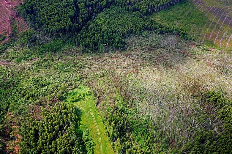 Километры деревьев снес смерч. Фото: Елена ДМИТРИЕВА