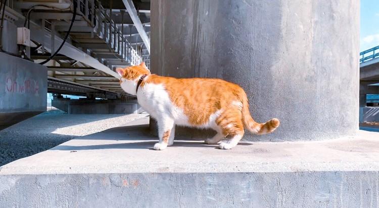 Попал в объектив папарацци. Фото: Кот Моста/VK