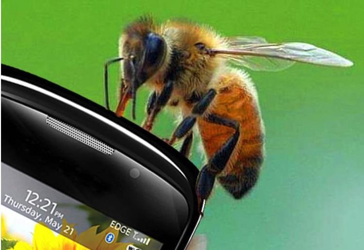 Символично, что название одной из популярных сетей сотовой связи имеет отношение к пчелам, в уничтожении которых эта сеть, возможно, тоже принимает участие, как и все другие.