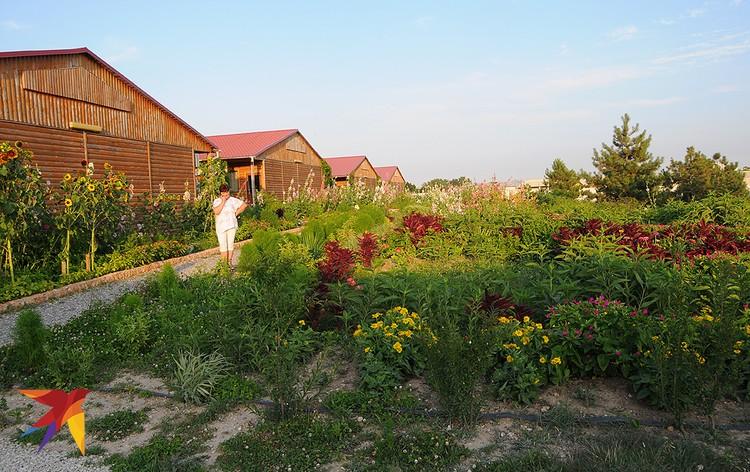 В новом пансионате на дальней окраине Черноморского есть несколько явных преимуществ – чистое море, тишина и большое количество цветов.