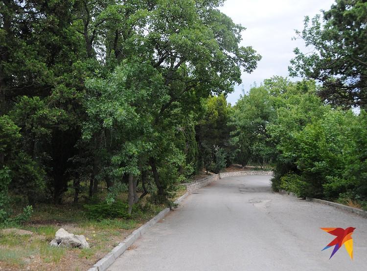 ...хотя и несколько запущенный парк из черноморской сосны, кипарисов и дубняка.