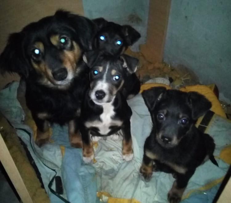 Вся собачья семья оказалась на улице в Новогоднюю ночь.