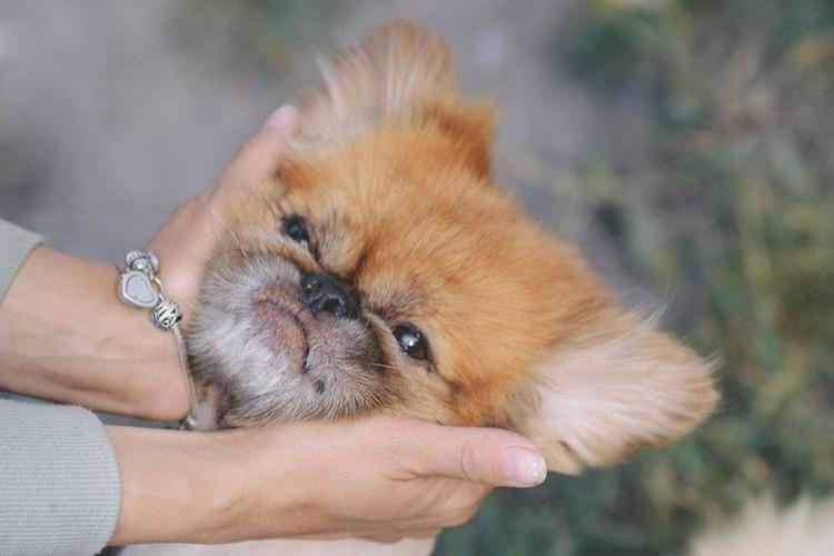 Девушке удалось привезти собаку в Новосибирск. Фото: Ольга ТИХОМИРОВА.