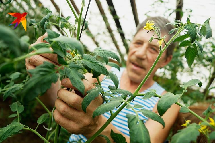 Прибавка ожидает пенсионеров, отработавших в сельском хозяйстве 30 лет и более
