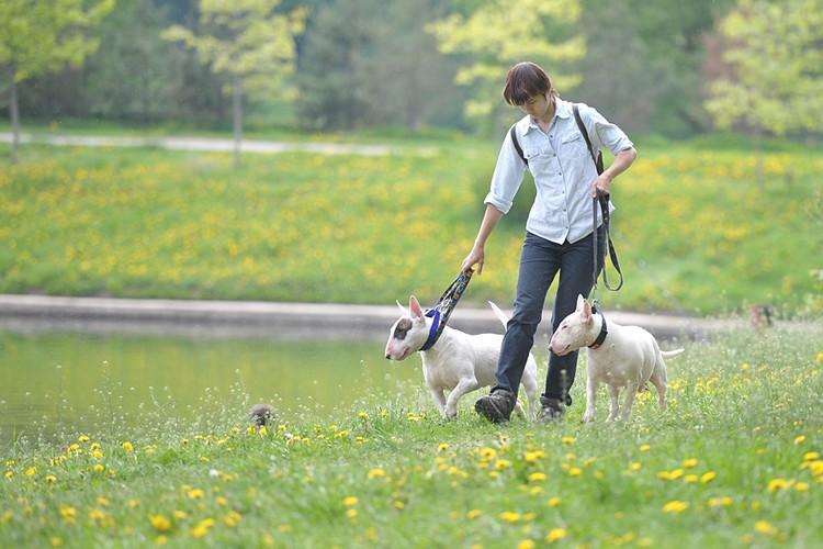 В этом году в МВД утвердили список потенциально опасных пород собак