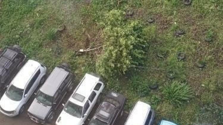 Шилкинская. Ветка приземлилась поблизости с авто. Фото: dpskontrol_125rus
