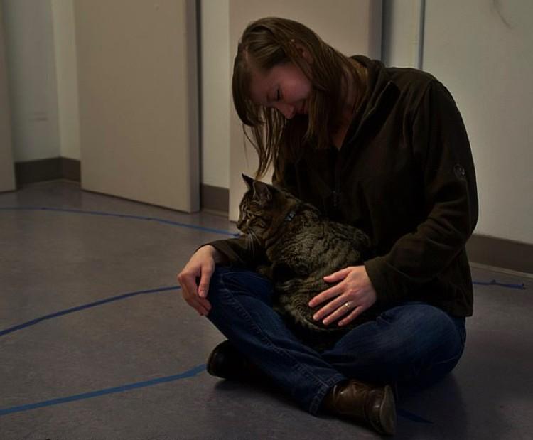 Сильная привязанность: кошка охотно идет на руки.