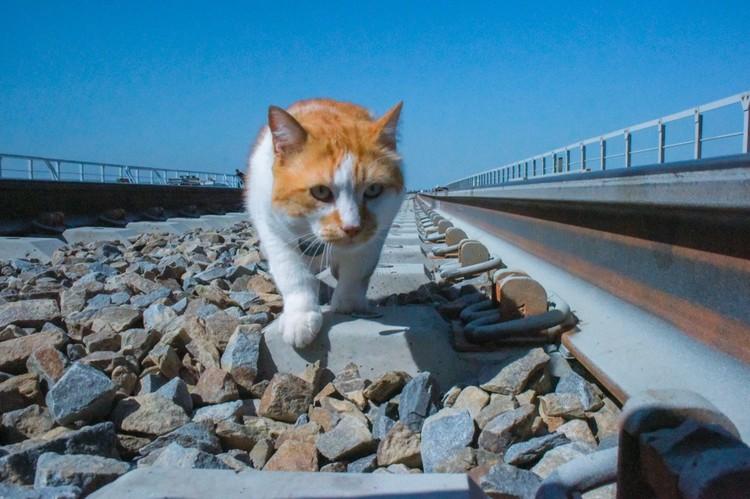 Котоинспектор на рабочем месте. Фото: кот Моста/VK
