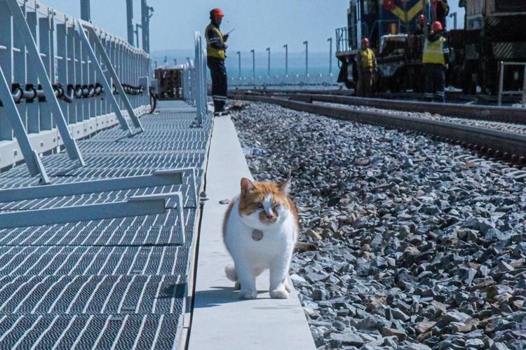 Важный и обаятельный прораб стройки века. Фото: кот Моста/VK