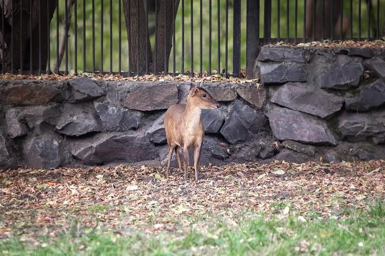В Новосибирском зоопарке появились новые обитатели. Фото: Новосибирский зоопарк.
