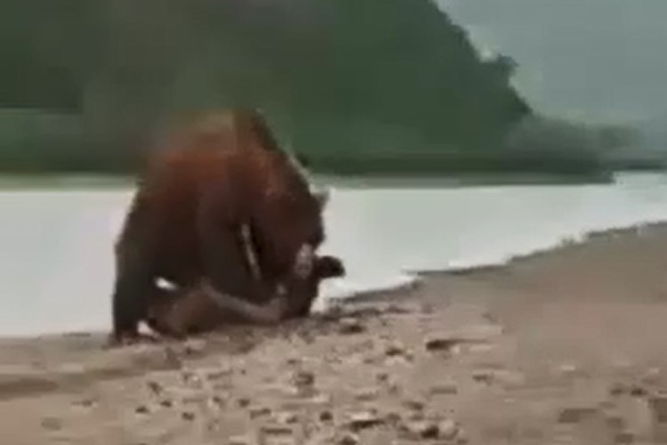 Медведь уже зажал нерпу всем своим весом. Фото: группа Crimburyatia.ru