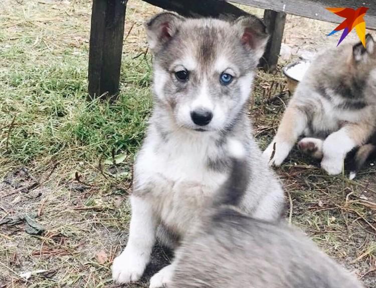 Вот таких щенят родили собаки. Фото: предоставлено Еленой Саютиной
