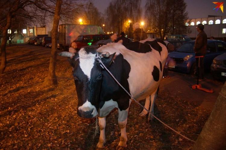 Пенсионеры спрашивали, сколько корова дает молока