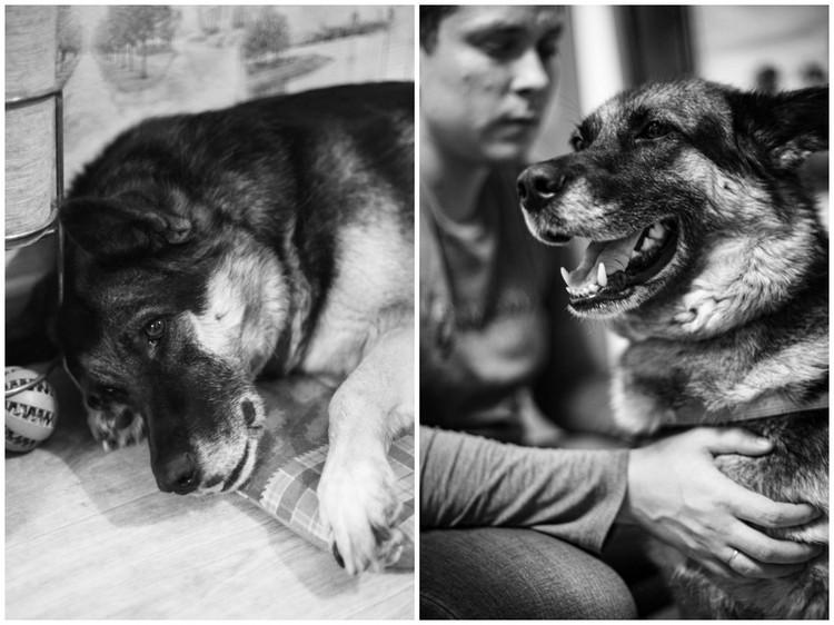 Марфа - умнейшая собака. Она полноценный член семьи Мартыновых. Фото: Елена Ерастова
