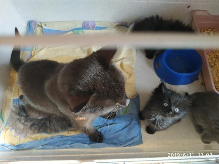 Она вырастила три поколения котят