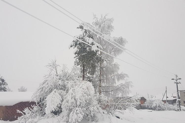 В регионе мокрый снег налип на провода. Фото: Сергей КОКОВИН