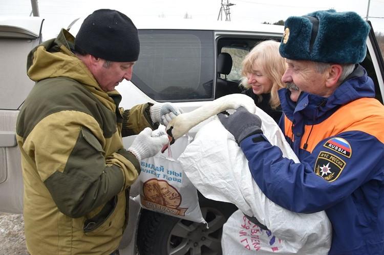 Тюменцы верят, что лебедя ждет выздоровление и он воссоединится с семьей. Фото Александра Зубарева