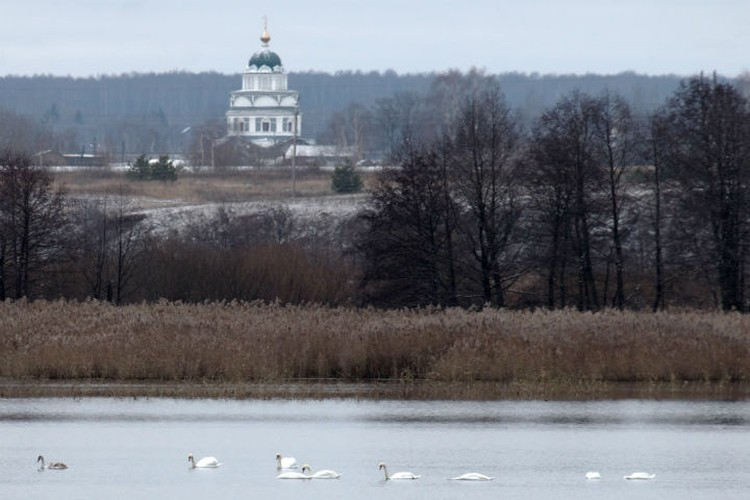 Лебеди зимуют в Вадском районе уже третий год подряд. ФОТО: Вячеслав Юсупов