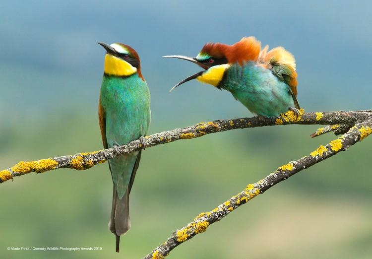 Фото: Vlado Pirsa/The Comedy Wildlife Photography Awards 2019