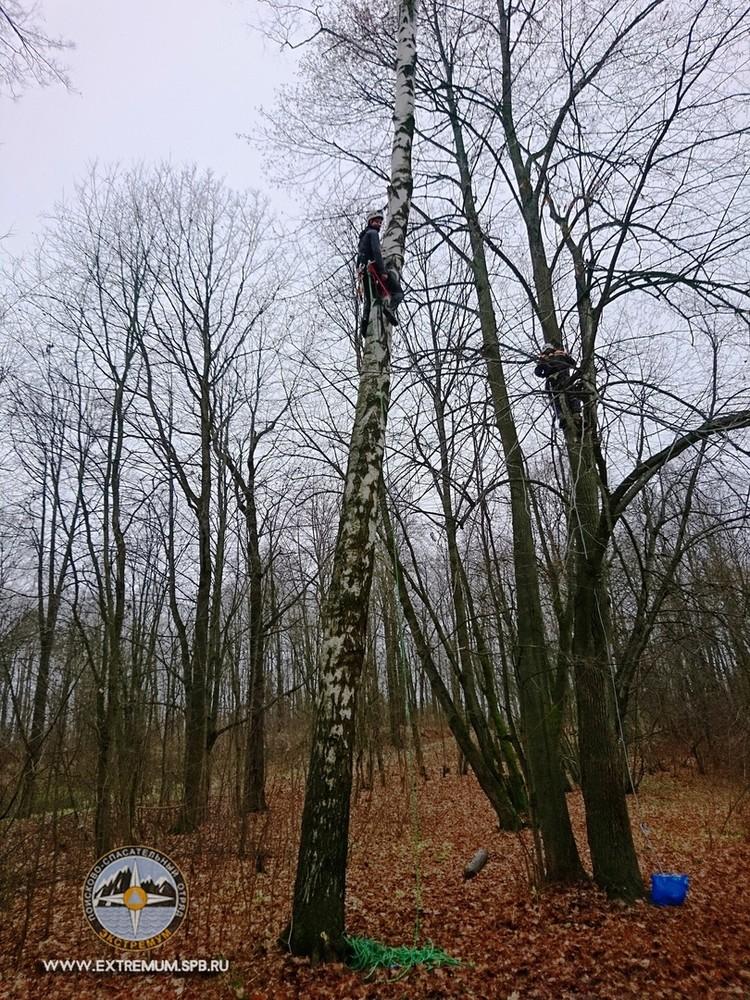 Новобранцев учат лазать по деревьям / Фото: КОШКИСПАС. Спасение животных. ПСО Экстремум
