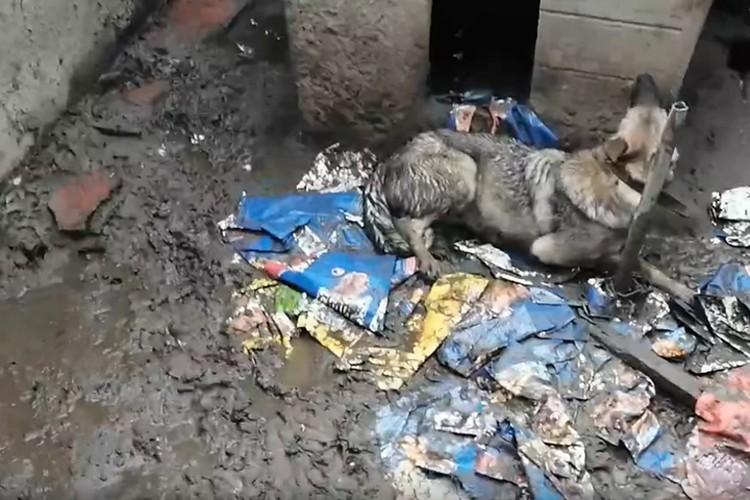 Так животные содержались возле дома. ФОТО: Лариса Саплина