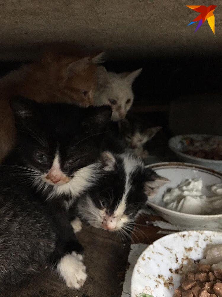"""Котят тут ну очень много. Фото: фонд помощи животным """"Мягкие сердца"""""""