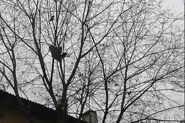 На дереве Тема провел пять суток. ФОТО: Лариса Саплина