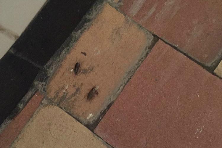 А вот и тараканы. Фото: Предоставлено Екатериной Надольской