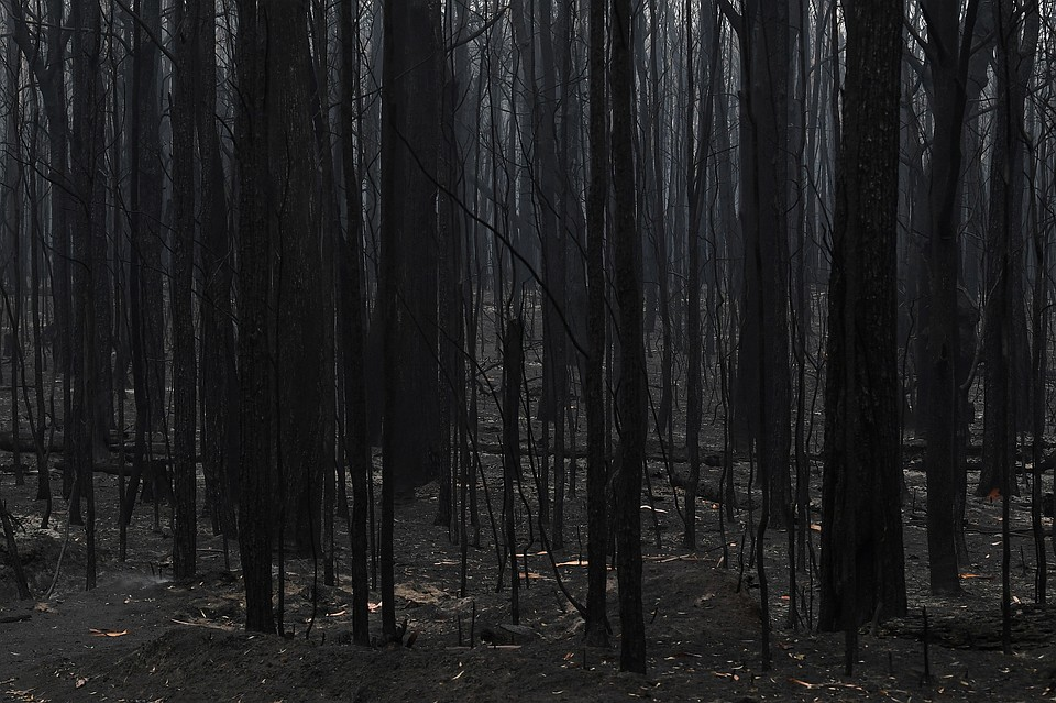 Точные причины небывало сильных пожаров неизвестны Фото: REUTERS
