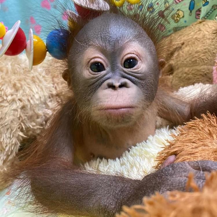 Сейчас малышке всего 4 месяца. Фото: Новосибирский зоопарк.