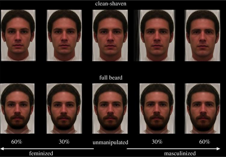 Эти фотографии предъявлялись женщинам - участницам эксперимента, чтобы они могли выбрать наиболее привлекательный тип мужского лица.
