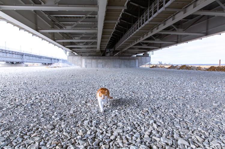 """Рыжий скучает по строителям. Фото: инфоцентр """"Крымский мост"""""""