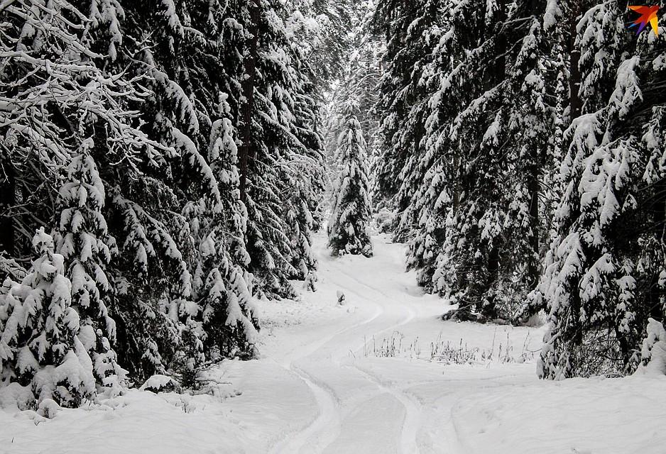 А помните, когда-то была такая зима? Фото: Оксана БРОВАЧ