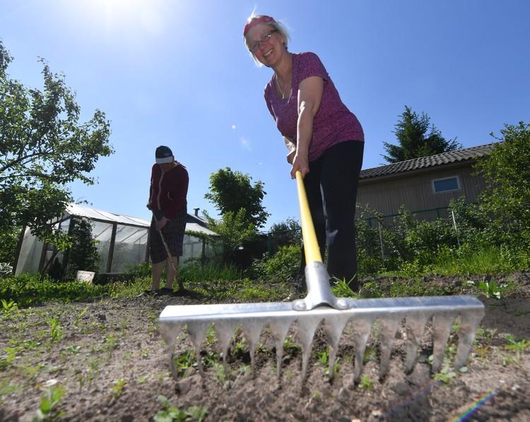 Поправки в налоговый кодекс, касающиеся владельцев частных подсобных хозяйств, успели окрестить «налогом на огород».