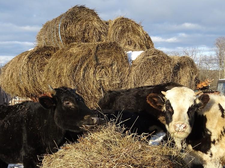 Лучше бы коров отчипировали - никто не знает, сколько их у нас в стране, чем они больны. Вот где «цифра» нужна