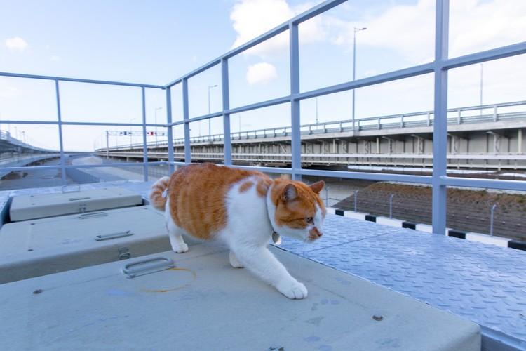 Кот всегда выглядит шикарно и неотразимо. Фото: кот Моста/VK