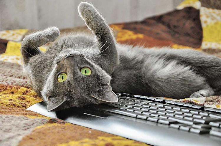 Не мешает, а помогает работать за компьютером.