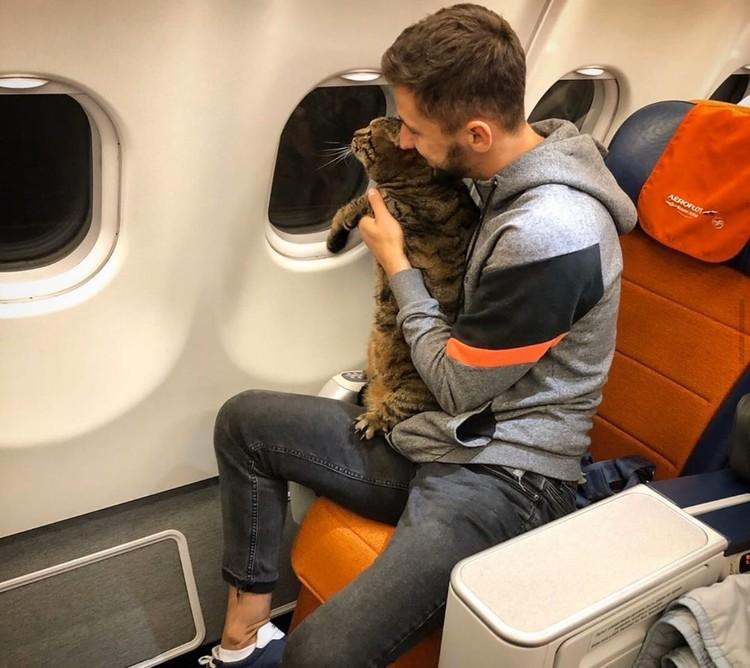 Михаил и Виктор стали известны после того, как мужчина обманом пронес кота на борт самолета.